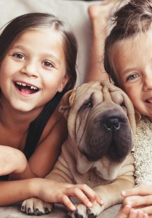 Care sunt cele mai potrivite rase de caini pentru copii?